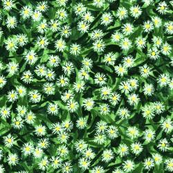 2945-001 Daisy Blue - Flowering Field - English Ivy Fabric