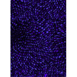 3584-002 Aruba - Anemone - Royal Fabric